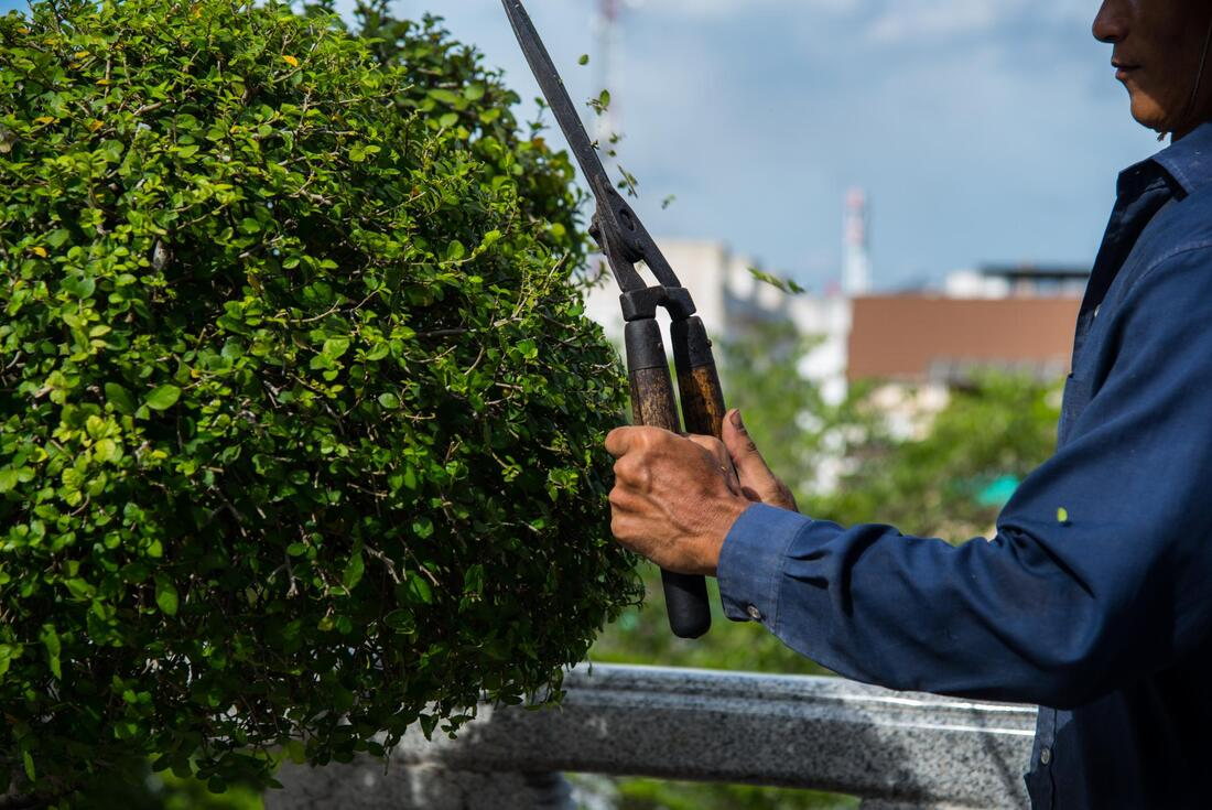 best tree pruning and cutting services